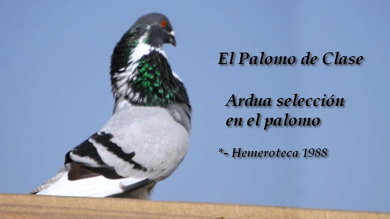 lapalomeria-ardua-seleccion