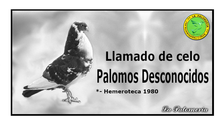lapalomeria-palomos-desconocidos