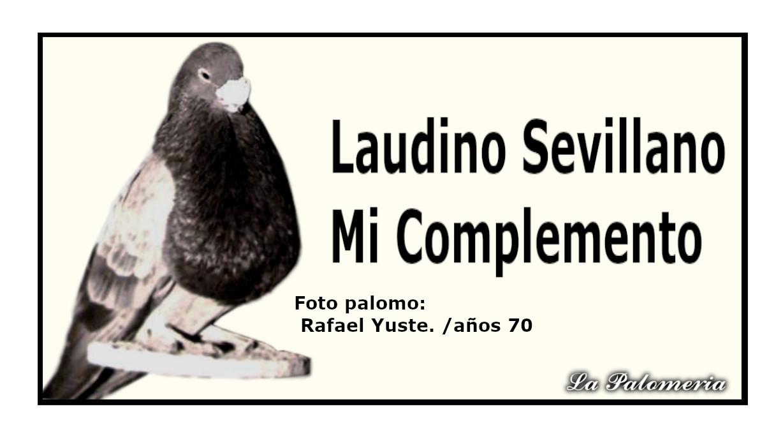 lapalomeria-laudino-sevillano-complemento