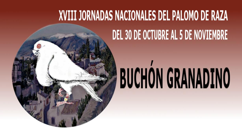 lapalomeria-granadino-nacional2017-raza