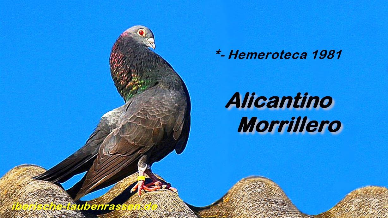 lapalomeria-alicantino-morrillero