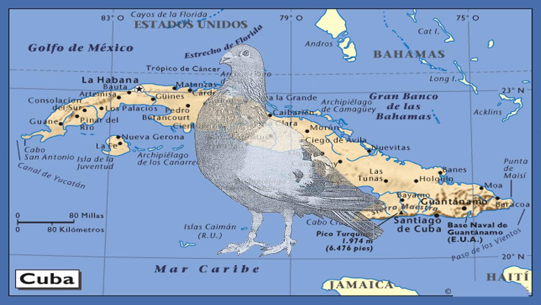 lapalomeria-furor-cria-palomas-cuba