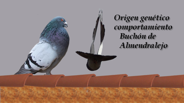 lapalomeria-origen-buchon-almendralejo