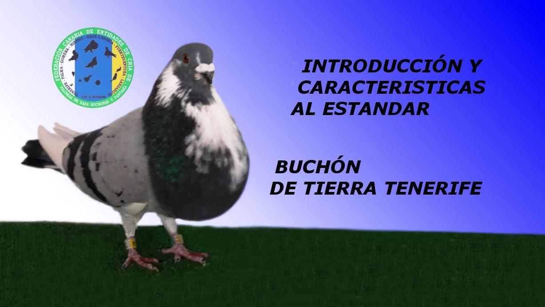 lapalomeria-introduccion-standar-buchon-tenerife