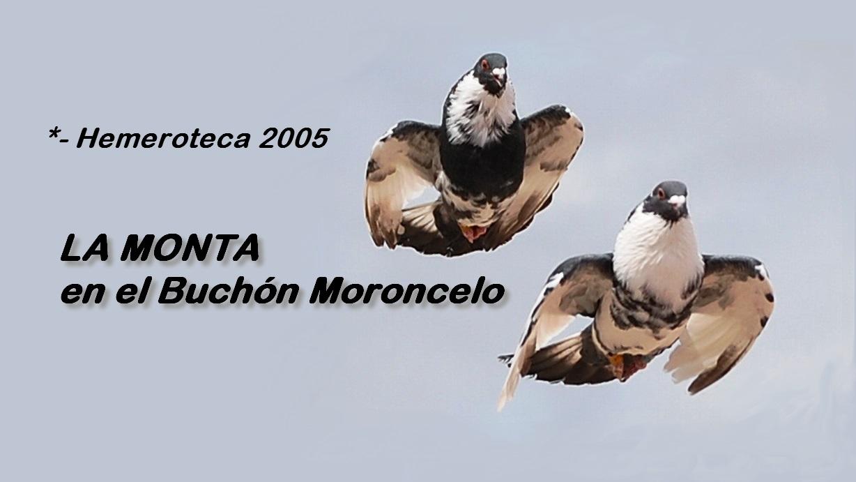 lapalomeria-monta-moroncelo