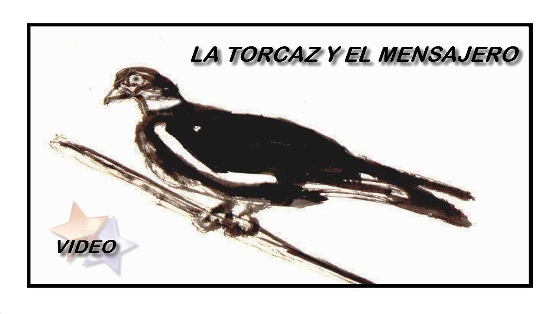 lapalomeria-torcaz-mensajero