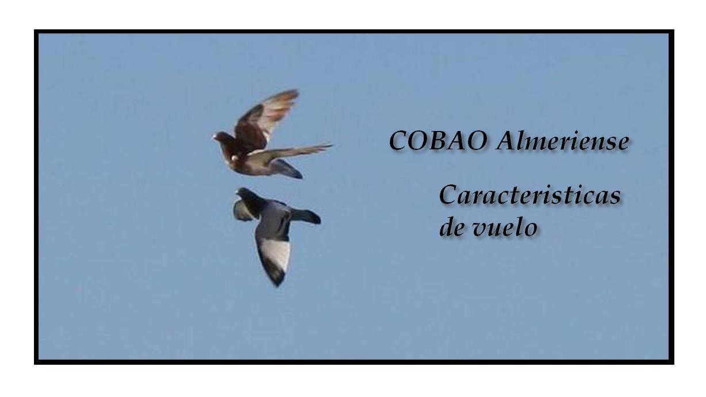 lapalomeria-cobao-vuelo