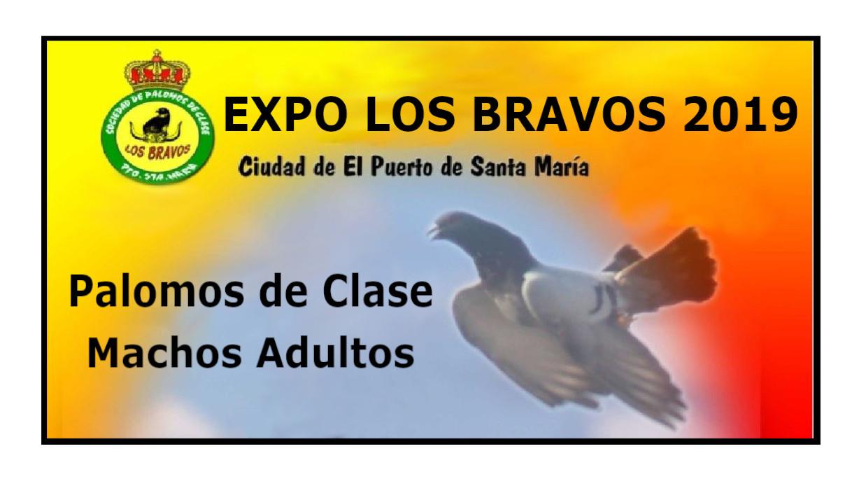 lapalomeria-expo-bravos-2019