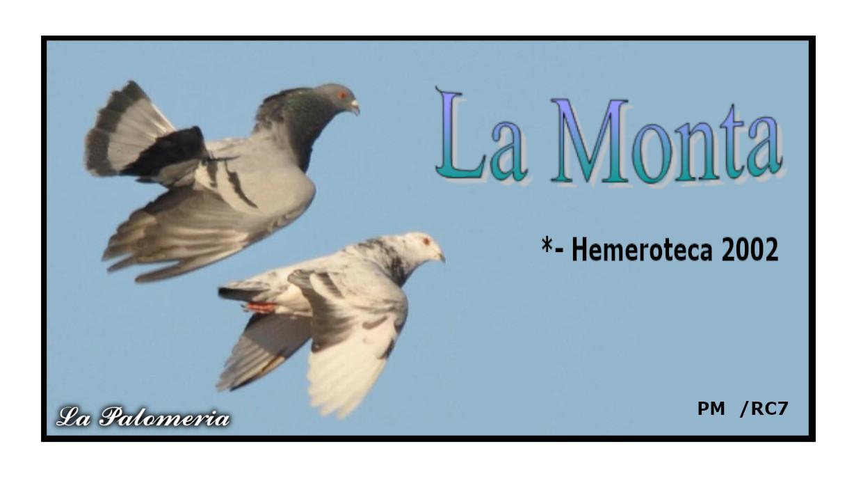 lapalomeria-monta-clase