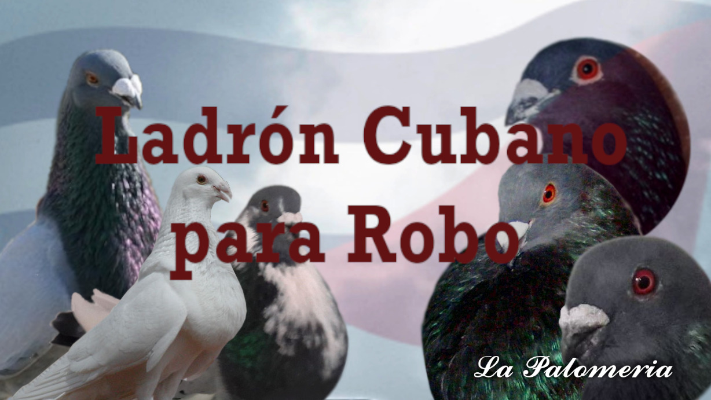 lapalomeria-ladron-cubano-pararobo