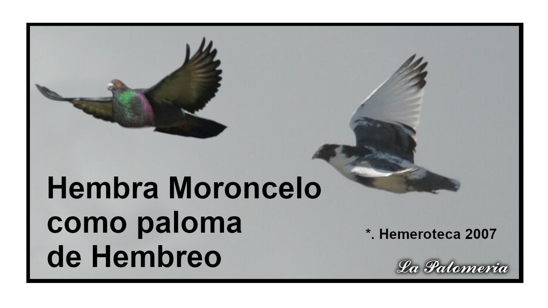 lapalomeria-moroncelo-paloma-hembreo-2007