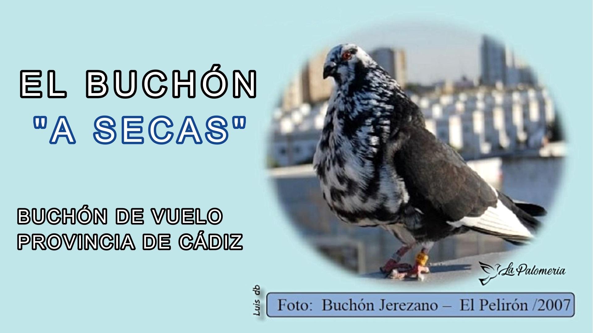 lapalomeria-buchon-secas