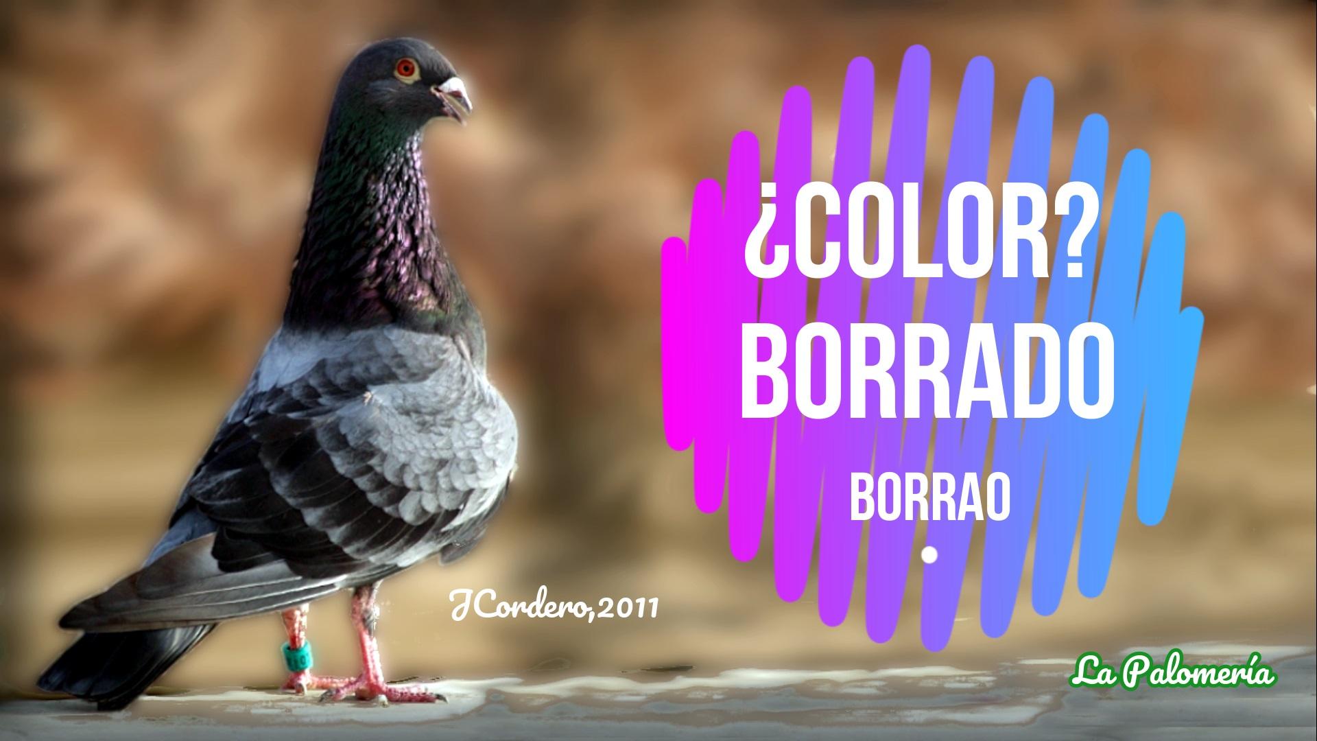 lapalomeria-color-borrao